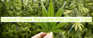 does marijuana kill cancer cells