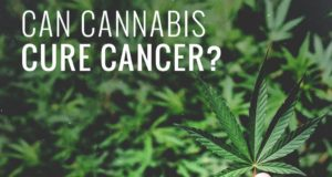 marijuana kill cancer cells